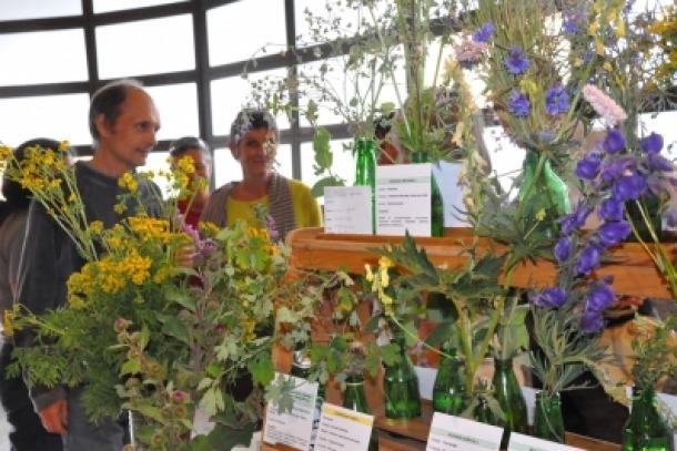 El Cenma organitza aquest dissabte la cinquena edició del curs d'etnobotànica