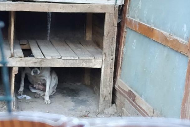 Estat actual d'algunes de les gàbies que acullen els animals.