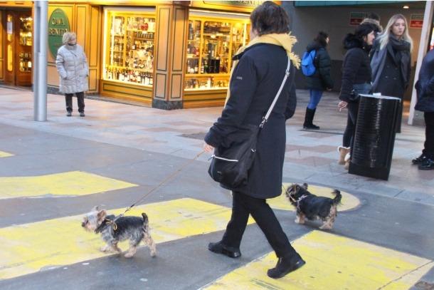 Gossos passejant pels carrers del país.