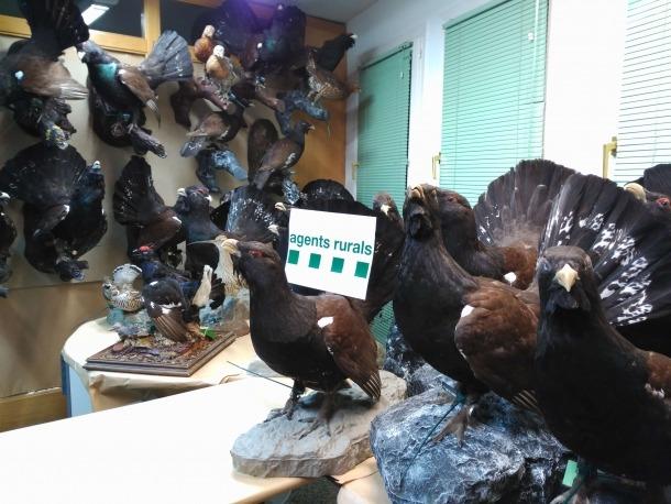 Comissats 40 galls fers dissecats en un domicili de la Vall d'Aran