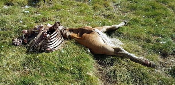 Les restes d'una euga morta per Cachou.