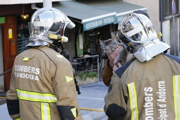 Els bombers rescaten un gos i un gat en un incendi a l'avinguda Fiter i Rossell d'Escales