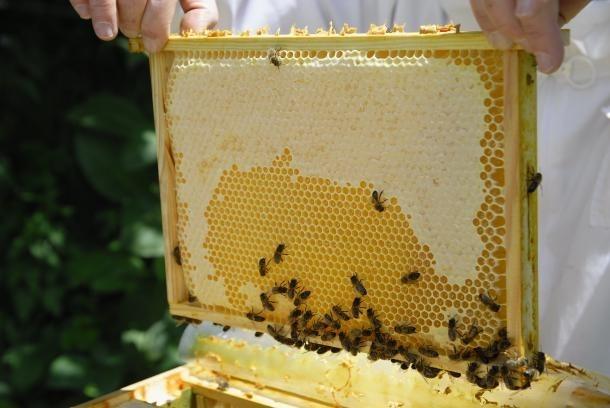 Agricultura veu un problema amb les abelles localitzat a la Massana