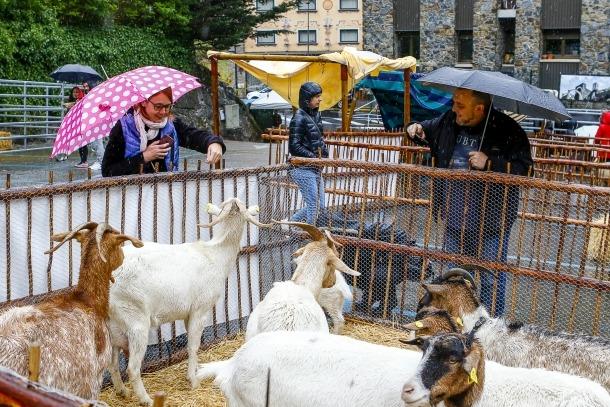 """El Comú va agrair l'esforç dels ramaders i es va mostrar """"content"""" pel desenvolupament de la Fira."""