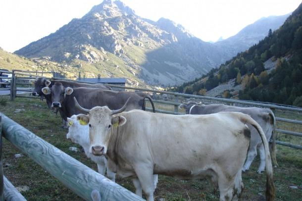Reglament per a la protecció dels animals en la matança