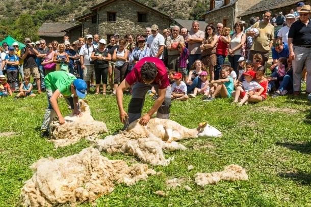 Tres homes xollant ovelles en l'edició de la Fira de l'any passat.