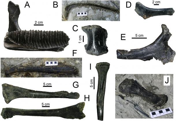 Ossos de dinosaures recuperats al jaciment del Molí del Baró, al Pallars Jussà.