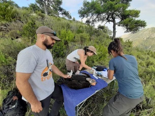 Experts prenent dades dels polls de voltor negre.
