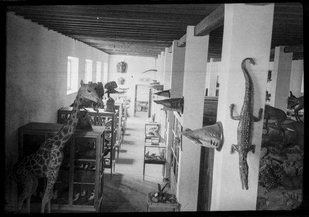 El Gran Museu Areny de Ciències Naturals exhibia 1.700 exemplars, inclosos una girafa i una boa, tres cocodrils i tres pitons, un elefant indi i, fins i tot, tres esquelets humans; tot aquest material va ingressar el 1948 al Museu de Zoologia de Barcelona.