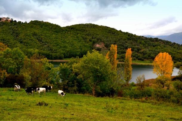 La sequera estival del 2016 ha afectat un 2,2% dels boscos