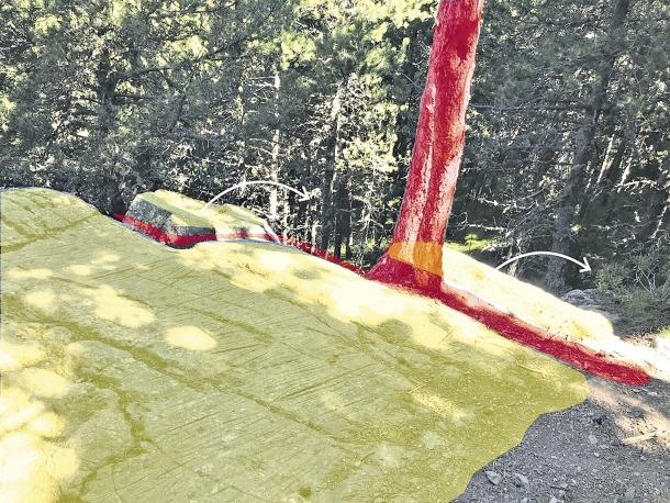 Imatge del pi que suposa una amenaça per al conjunt arqueològic canillenc.