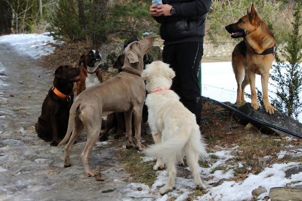 Una canilla de gossos, en aquest cas no perillosos, amb el seu cuidados.