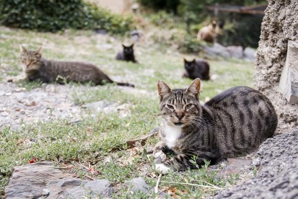 Animals de companyia i habitatge