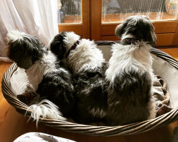 Les tres gossetes de Jael Pozo i família, les primeres a afegir-se a la campanya des d'Andorra.