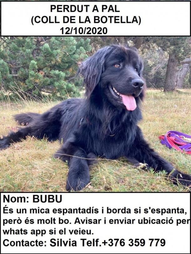 Bubu es va perdre dilluns a la muntanya.