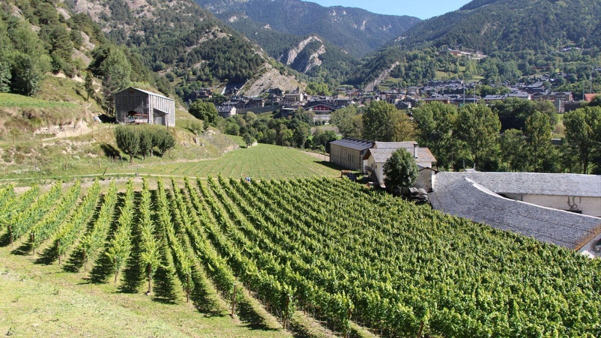Una plantació de vinyes.