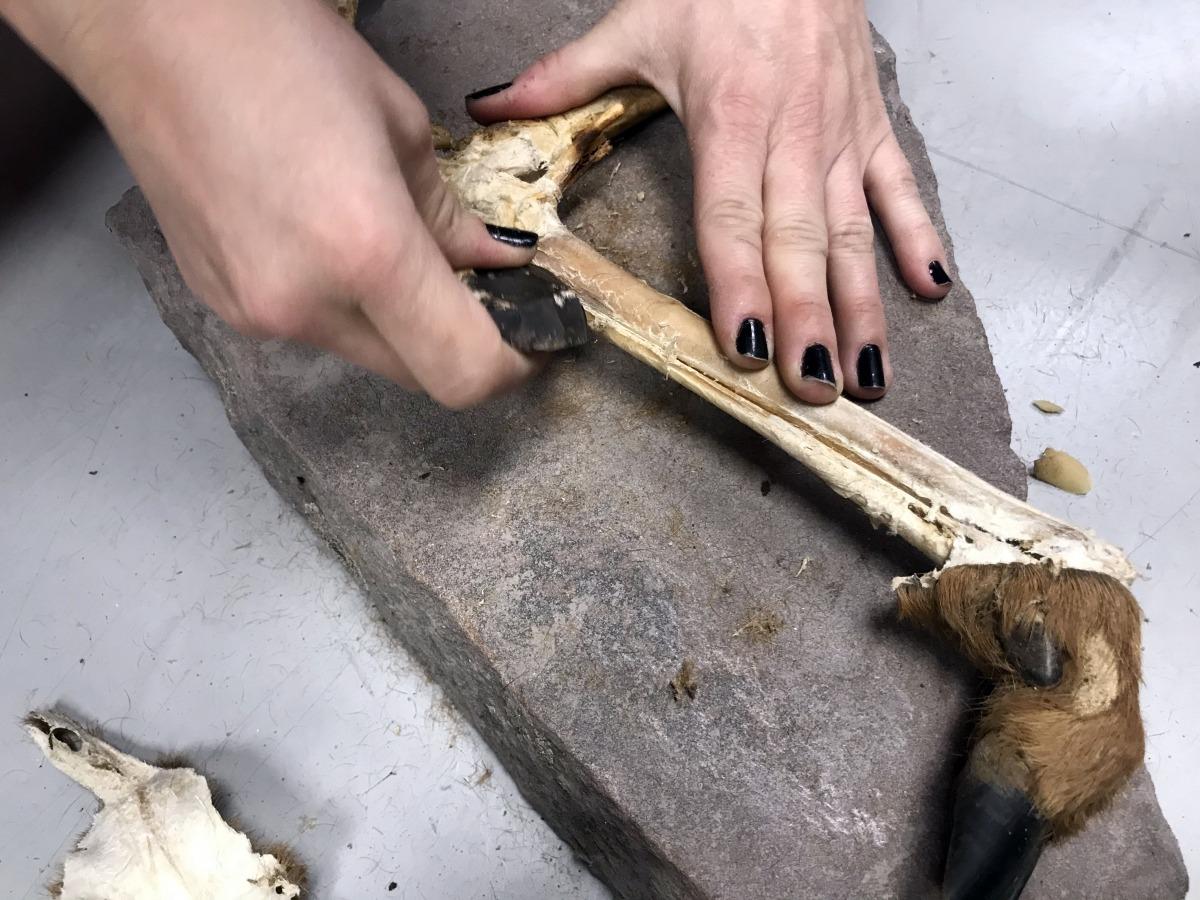 S'elimina amb el ganivet tot el teixit que sobra.