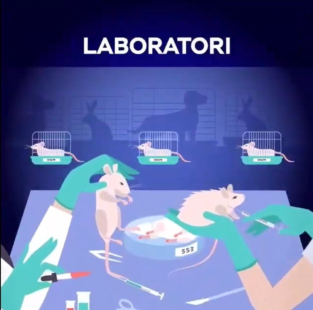 Imatge del video compartit per la plataforma a les xarxes.