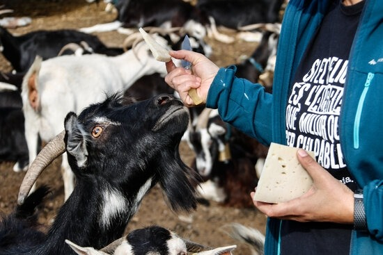 L'associació aplega ramaders i productors.