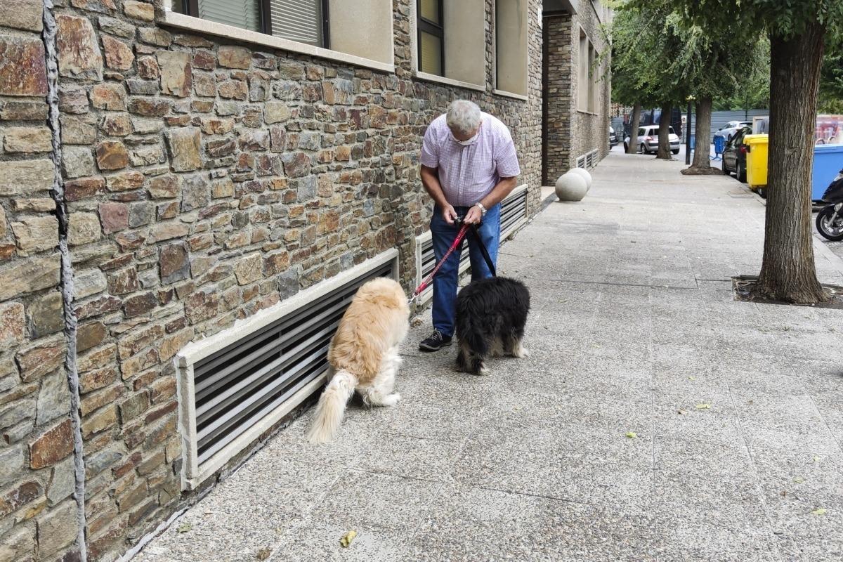 El propietari recull els excrements d'un dels seus gossos.