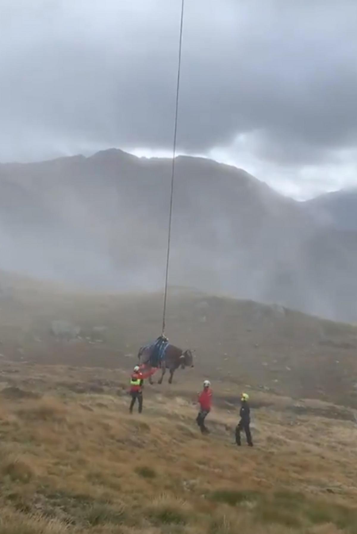 Captura del vídeo de rescat la vaca.