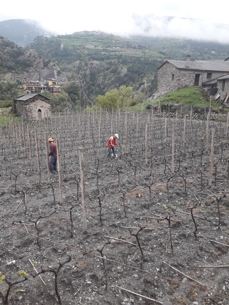 Les vinyes de Mas Berdaguer.