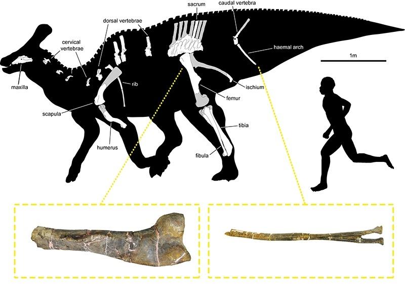 Esquema realitzat pels investigadors sobre la probable aparença de la criatura.