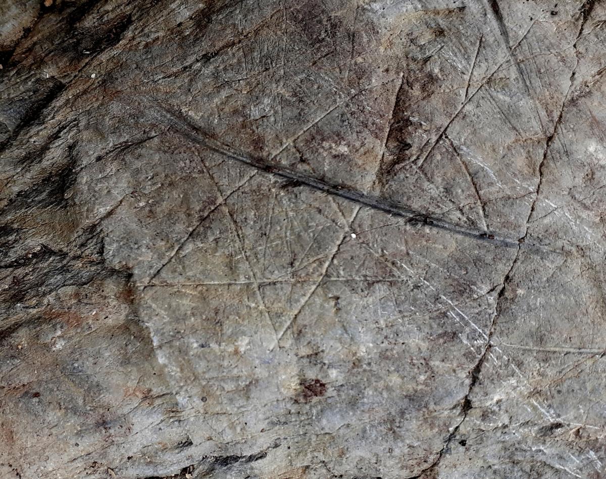 Estel de cinc puntes travessat per un gravat fusiforme: tot i el que suggereix el sentit comú, la ratlla deu ser posterior.