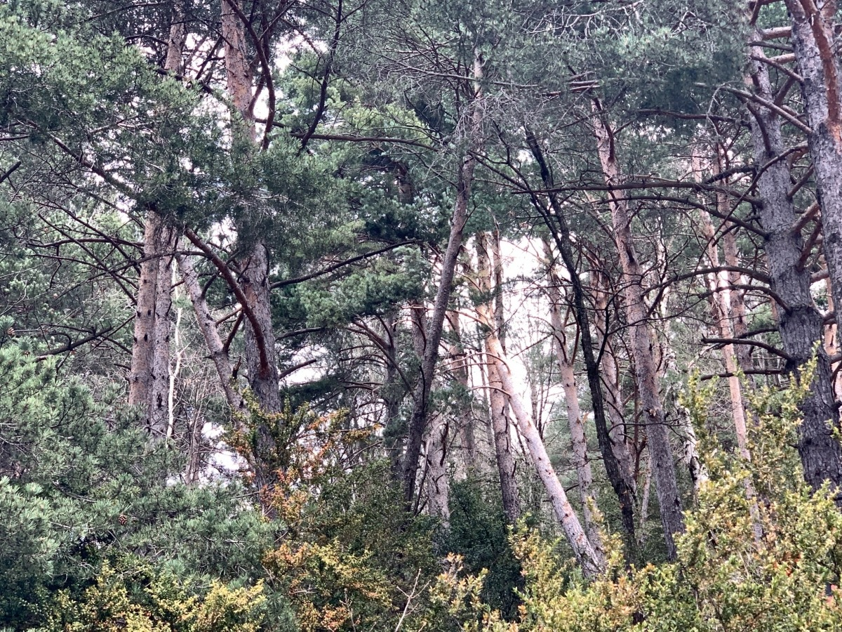 Els boscos són un dels principals embornals de carboni.