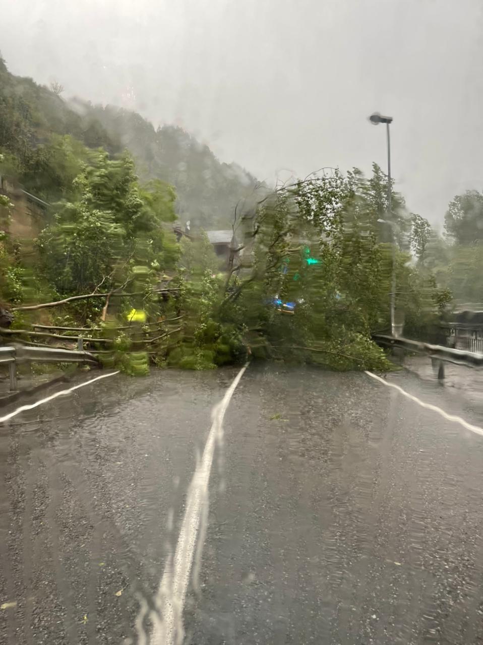 L'arbre caigut a la CG-3.