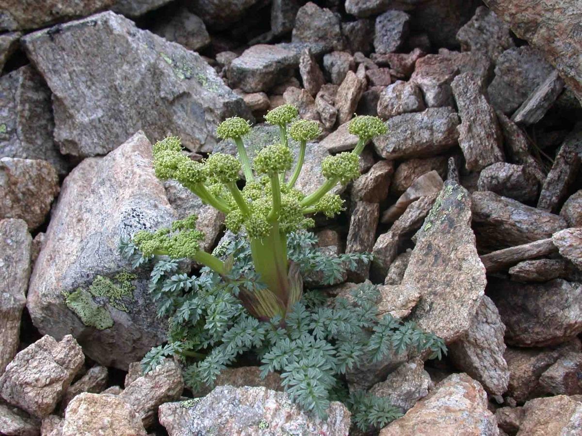 Mostra de Xatardia Scraba a la reserva natural de Mantet.