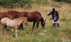Ordino celebra la bona salut i increment de les explotacions de bestiar durant la tradicional benedicció