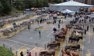 Uns 200 caps de bestiar participaran en la 38a Fira concurs d'Andorra