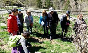 El CENMA organitza una sortida a Sorteny per conèixer les papallones diürnes El CENMA organitza una sortida a Sorteny per conèixer les papallones diürnes