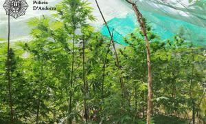 Una imatge de la plantació.