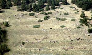 Els ajuts per a les pràctiques ramaderes tradicionals han estat publicats aquest dijous al BOPA.