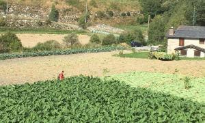 Una explotació agrícola andorrana.