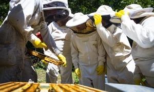 Un apicultor mostra com treballen les abelles a un grup de visitants.