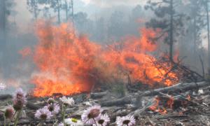 Un incendi forestal.