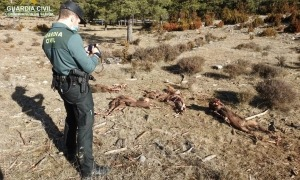Imatge de les restes localitzades pels agents de la Guardia Civil