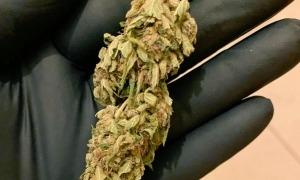 Una mostra de marihuana.