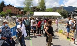 Ordino ha celebrat aquest cap de setmana la Fira del bestiar.
