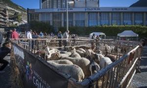 Una edició anterior de la Fira del bestiar i artesania de Canillo.