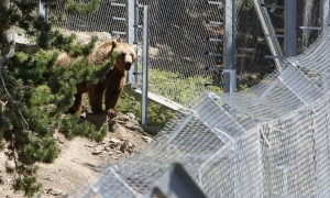 Els animalistes es pronuncien sobre la sentència absolutòria per l'animal abatut.