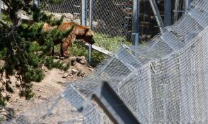 Naturlàndia introdueix millores en la seguretat i les condicions al parc