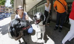 Querella de Laika contra la impunitat en els maltractaments a animals