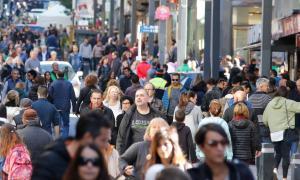 El sector preveu un fort augment de l'ocupació i el preu per la Puríssima