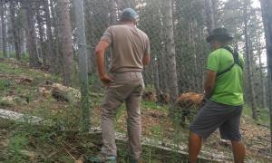 Seriosos dubtes sobre l'explicació per la mort d'un os de Naturlàndia
