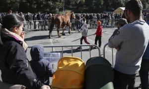 Un dels cavalls participants en la fira concurs d'Andorra la Vella passeja davant del públic, ahir.