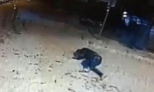 El Comú esperarà el resultat de la investigació policial de la baralla del Pas per actuar
